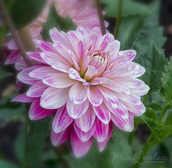 Soft lighting macro flower