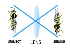 A lens with a one to one magnification ration is a true macro optical instrument