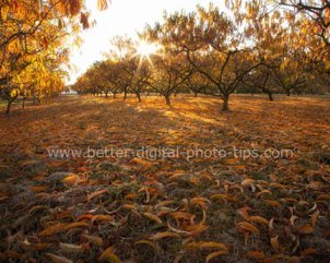 Nature print sales- Fall orchard leaves Sewell NJ
