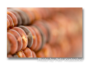 Abstract macro photography concept