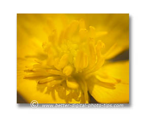 Use backlighting in your macro photography to get abstract photos