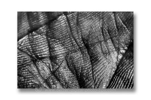 Abstract macro photography - image of palm, converted to black and white