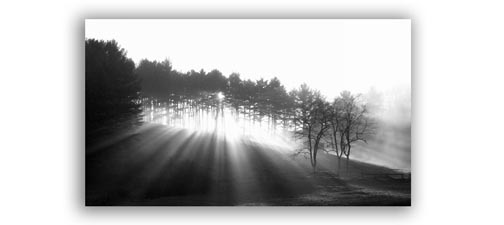 Black and White Photography Silhouette of Trees