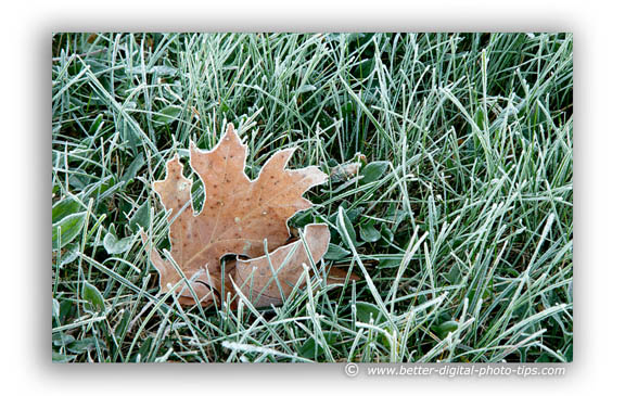 Frosty leaf as rule of thirds example