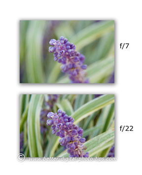 Macro photography tips about using two different f-stops to dramatically change the depth of field