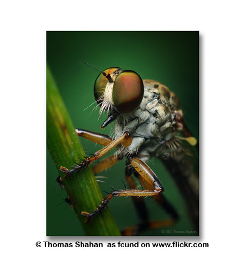 You can tell when a non-beginning photographer like Thomas Shahan creates amazing macro photography