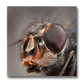 Top photo on more macro photograph tips page-insect eye