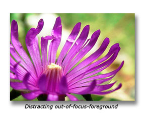 Depth of field is a very important aspect to pay attention to with macro photography