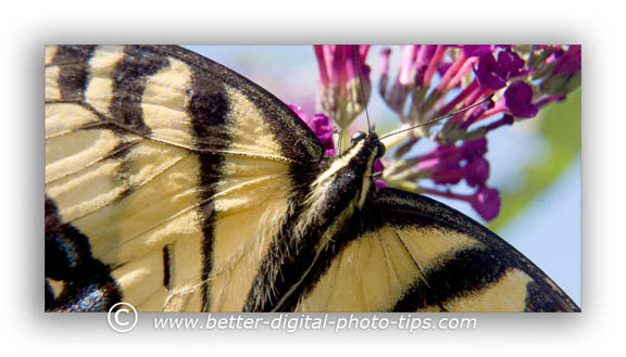 nature Photography - macro photo of a butterfly