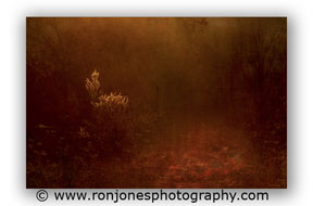Nature Photography by talented Ron Jones Photography