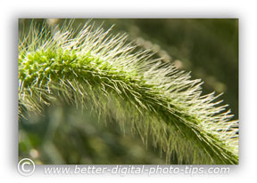 Grasses are an interesting subject matter to consider for nature photography