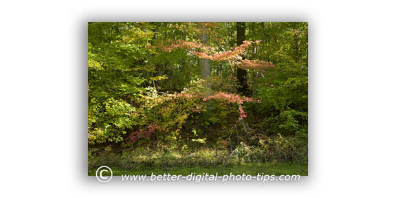 Nature picture of fall colors
