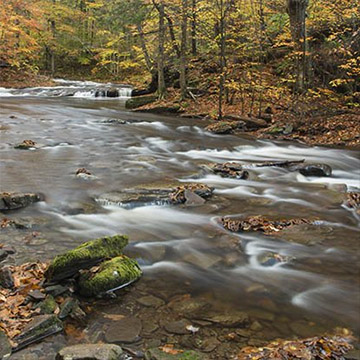 Ricketts Glen, Kitchen Creek