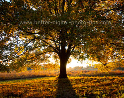 Valley Forge PA - Nature Print Sales