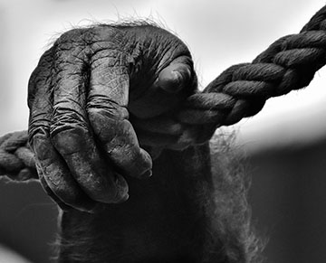 black and white ape hand