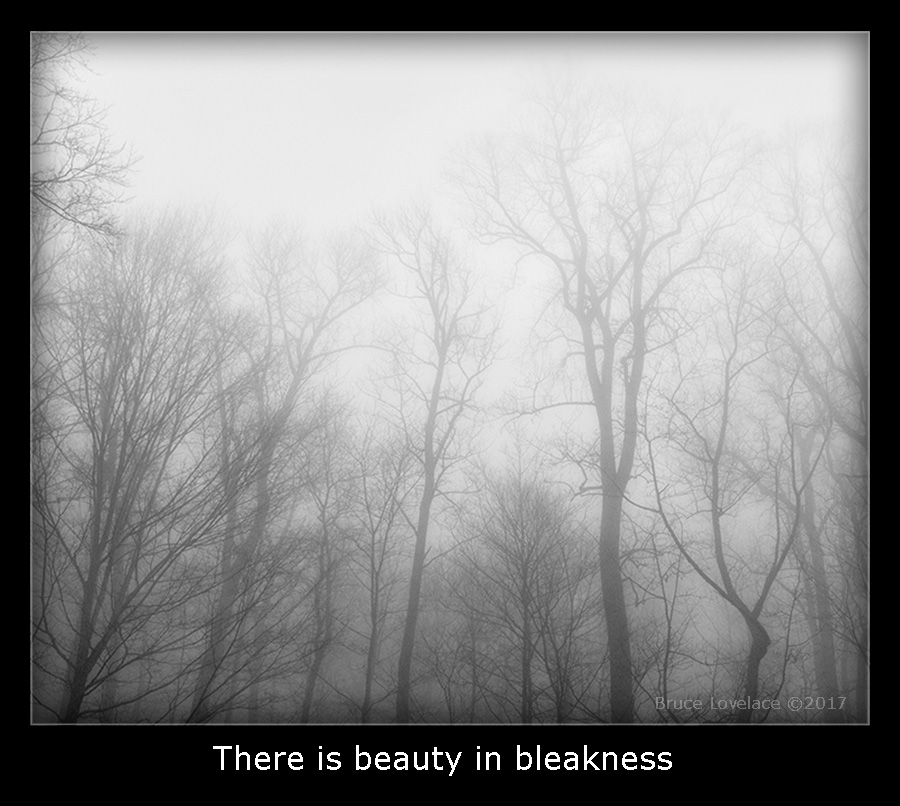Black and White Nature Photo