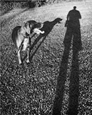 Black and White Photo of a dog, his owner, and their shadows