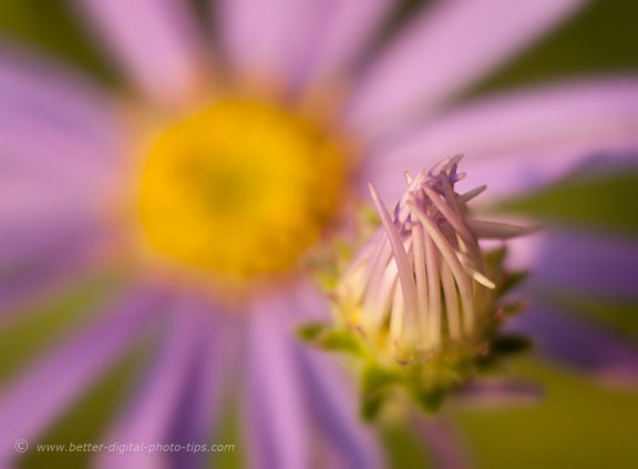 Close-up of flower with blurry background
