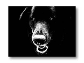 High contrast black and white portrait of dog