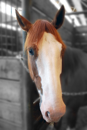 Don't be a horse's XXX. Use a decent photo for your Linked-In profile.