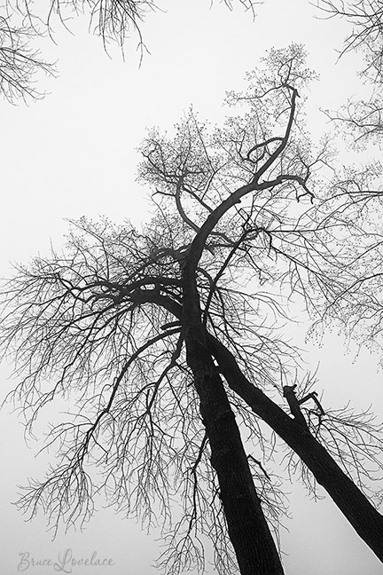 black and white tree silhouette