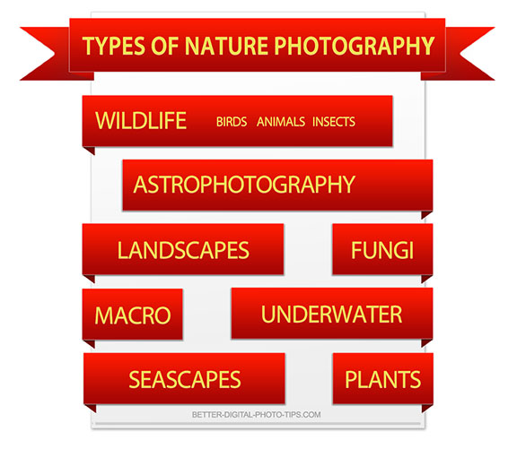 Types of nature photography