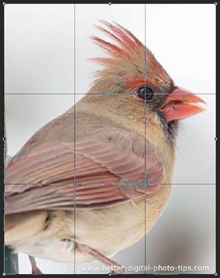 Female cardinal.
