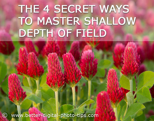 Infographic-how to get shallow depth of field