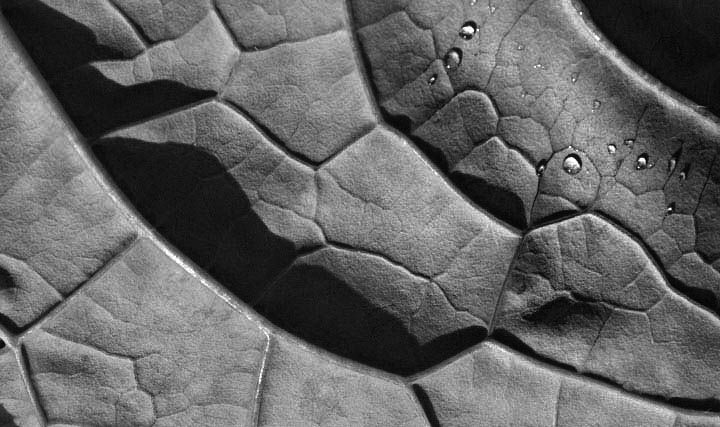 abstract kale shadow