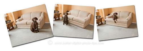 3 Separte dog photos combined into one multi-position dog photo