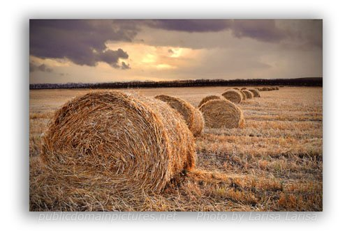 Use Straw Photo as an Example of Depth of Field