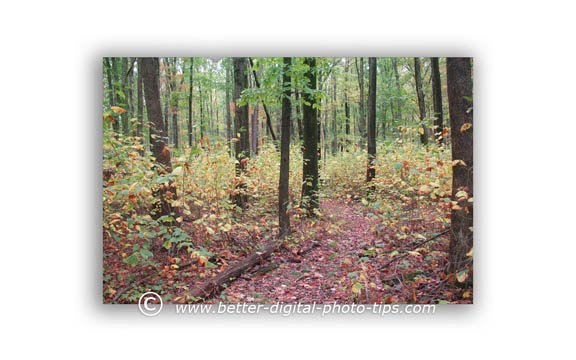 One of the photos of the Loyalsock Trail from our backpacking adventure in Pennsylvania