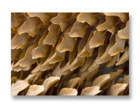 Seek out textures in nature to inspire you to more close-up photography designs