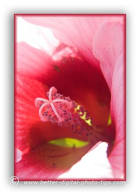 Macro photography of a flower