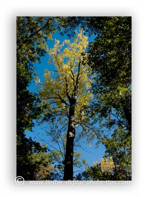 Yellow leave and blue sky surrounded by dark green leaves in this nature photo