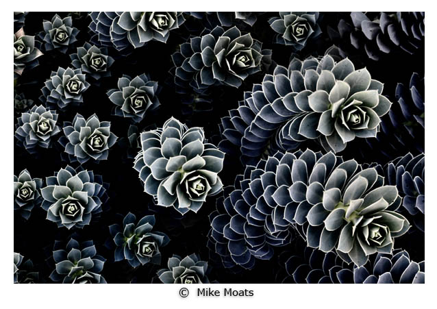 Photo 2 by Mike Moats - Macro Photography