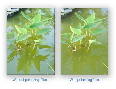 Use a polarizing filter to reduce reflections