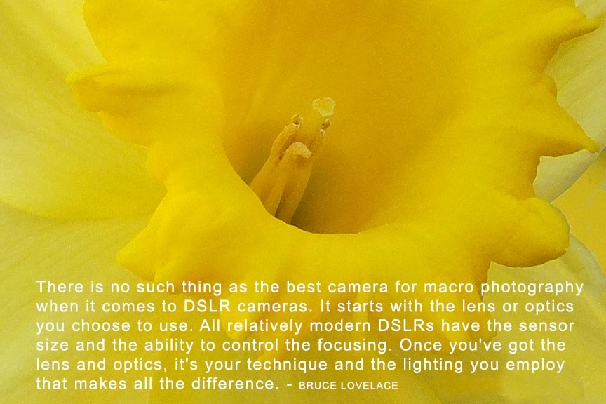macro camera quote by Bruce Lovelace
