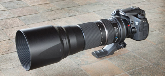 Tamron 150-600mm Lens on Canon EOS 70D