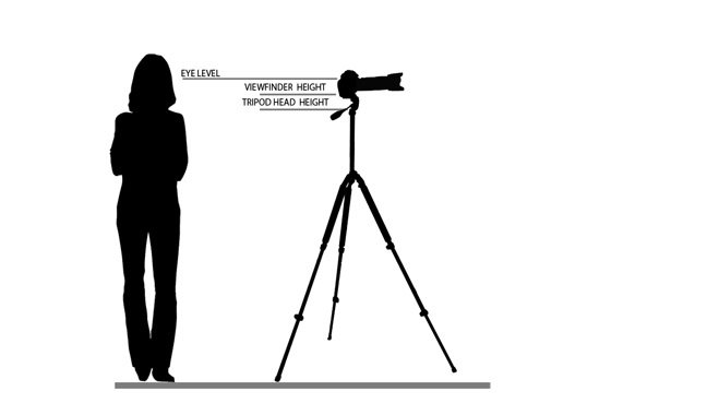 Diagram of how tall a tripod should be