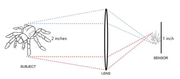 Diagram showing magnification factor for macro photography