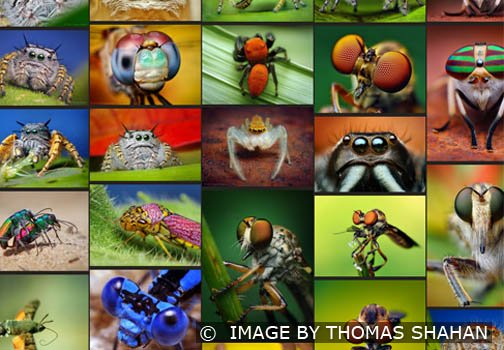 Screen shot from one of the famous macro photographer's web site - Thomas Shahan