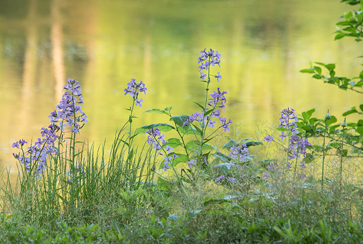 Simple nature photo of flowers