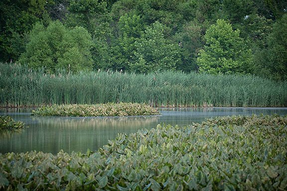 Photo of the National Wildlife Refuge Tinicum, PA