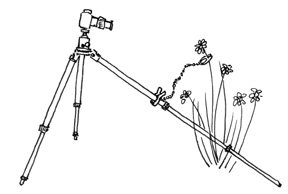 Plamps used as a monopod accessory
